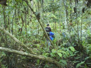 di hutan lagi