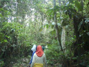 di hutan