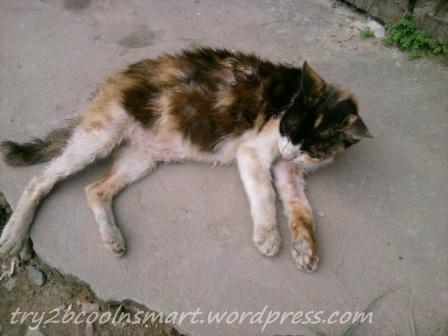 Kucing Buluk