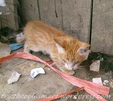 Kucing Buta