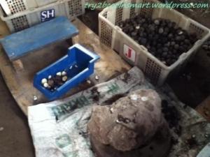 Pemecahan cangkang kemiri
