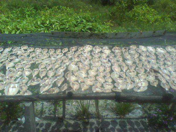 Ikan yang dijemur, memberi kontribusi terhadap aroma kampung nelayan